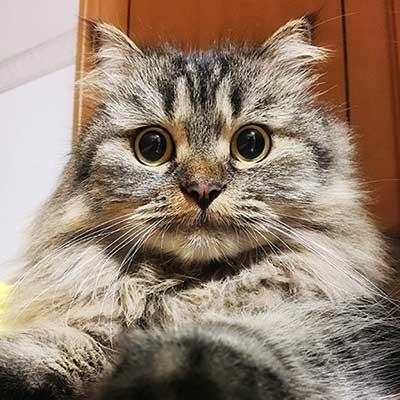 種類 猫 一覧 の