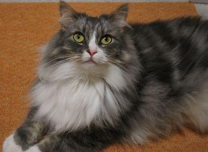 http://www.100neko.net/image/cat2636.1218431337.jpg